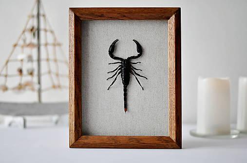 škorpión v rámčeku