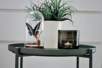 Dekorácie - Graphium milon- motýľ v sklenenej kupole - 11371351_