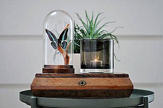 Dekorácie - motýľ v sklenenej kupole - 11371352_
