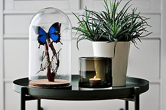 Dekorácie - motýle v sklenenej kupole - 11371598_