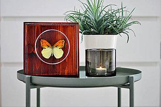 Obrázky - Hebomoia leucippe- motýľ na drevenej podložke - 11372894_