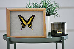 Obrázky - Papilio thoas- motýľ v rámčeku - 11374674_