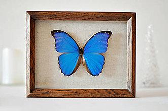 Obrázky - motýľ v rámčeku - 11379550_