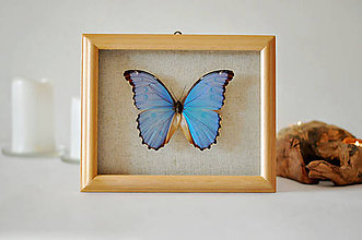 Obrázky - motýľ v rámčeku - 11379600_
