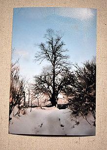Papiernictvo - pohľadnica - lipa v zime - 11391515_