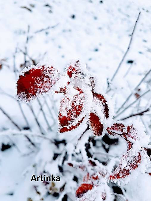 Foto - zamrznuté