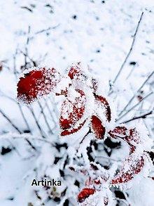 Fotografie - Foto - zamrznuté - 11395785_