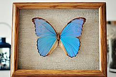 Obrázky - motýľ v rámčeku - 11399724_