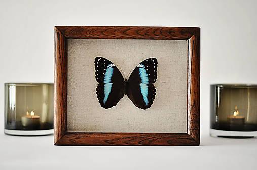 Morpho achilles-motýľ v rámčeku