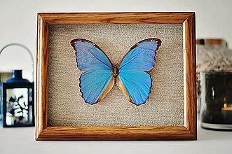 Obrázky - motýľ v rámčeku - 11399715_