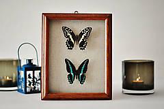 Obrázky - motýle v rámčeku - 11402478_