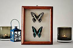 Obrázky - motýle v rámčeku - 11402479_
