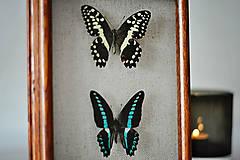 Obrázky - motýle v rámčeku - 11402481_