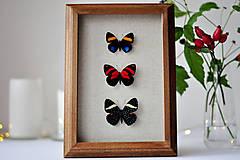 Obrázky - motýle v rámčeku - 11407800_