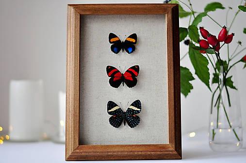 motýle v rámčeku