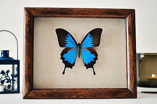 motýľ v rámčeku
