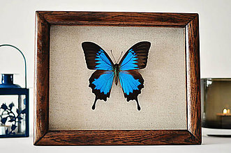 Obrázky - motýľ v rámčeku - 11411211_
