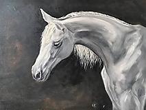 Obrazy - Biely kôň - 11446390_