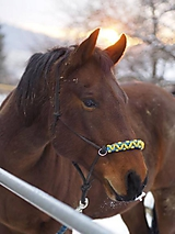Pre zvieratká - Parelliho ohlávka BISARI - 11446069_