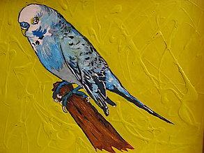 Obrazy - Papagájik vlnkovaný - 11449695_