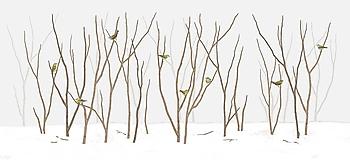 Grafika - TENNESSEE WARBLER IN FOREST -20% - 11456462_