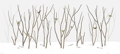 Grafika - TENNESSEE WARBLER IN FOREST - 11456462_