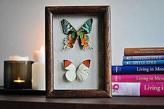 Obrázky - motýle v rámčeku - 11463239_
