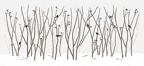 Grafika - BLACKBIRD IN FOREST - 11464295_