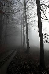 Fotografie - V hmle - 11470461_