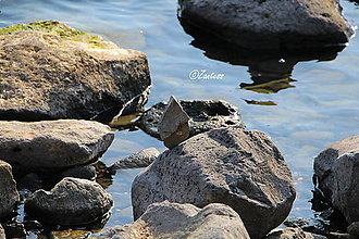 Fotografie - Fotografia... Život v rovnováhe - 11474273_