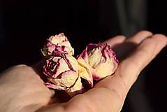 Fotografie - Rozprávka o ružiach... - 11499365_