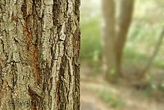 Fotografie - Spoza stromu - 11504433_