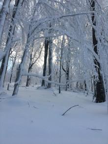Fotografie - Snehová brána - 11514044_