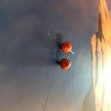 Náušnice - Červené drievka - 11515615_