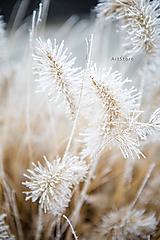 Fotografie - Zimný tanec - 11523135_