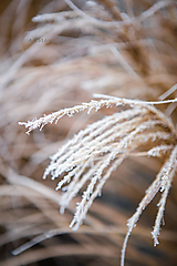 Fotografie - Zimný tanec II. (digitálna verzia) - 11523141_