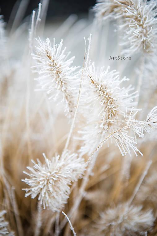 Zimný tanec (digitálna verzia)