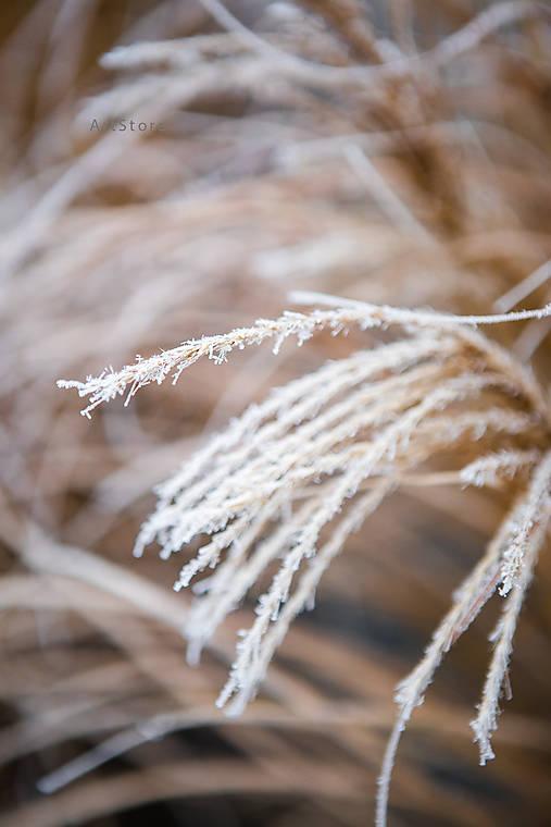 Zimný tanec II. (digitálna verzia)