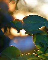 Fotografie - Pri západe slnka... - 11526676_