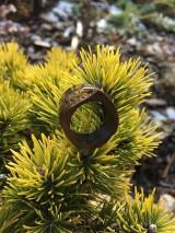 Prstene - Drevený prsteň: Na morskom dne - 11563087_