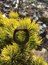 Prstene - Drevený prsteň: Na morskom dne - 11563089_