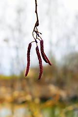 Fotografie - Zimný konárik IX. - 11568832_