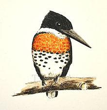 Kresby - Rybařík amazonský - vel. A4 - 11576116_