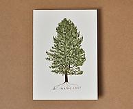 Papiernictvo - pohľadnica - strom - 11578446_