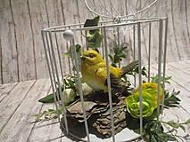 Dekorácie - Vtáčik v klietke - 11597546_