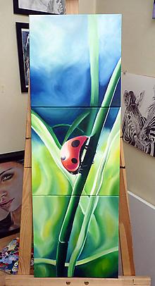 Obrazy - Triptych lienka - 11595514_