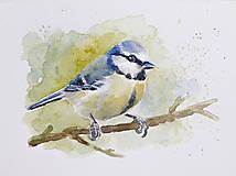 Obrazy - Sýkorka belasá - akvarel - 11617887_