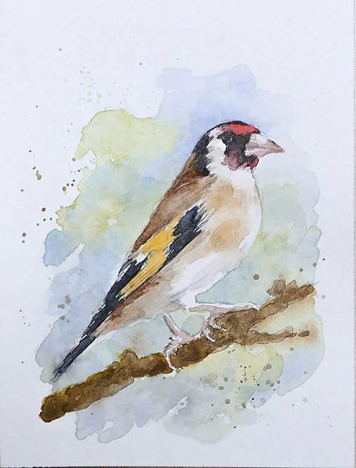 Stehlík - akvarel