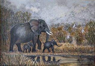 Obrazy - Krajina slonov - 11616496_