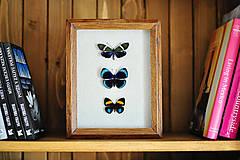 Obrázky - motýle v rámčeku - 11621890_